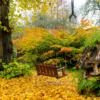 Schaukel im Herbst