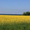 Probstei,Rapsblüte,Ostsee